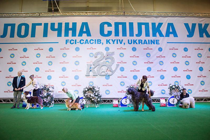 Группа FCI I - BIS CACIB «Киевская Русь - 2015» (Украина), 5 декабря 2015 года