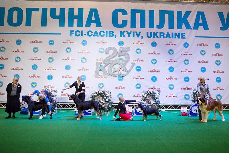 Группа FCI II - BIS CACIB «Киевская Русь - 2015» (Украина), 5 декабря 2015 года