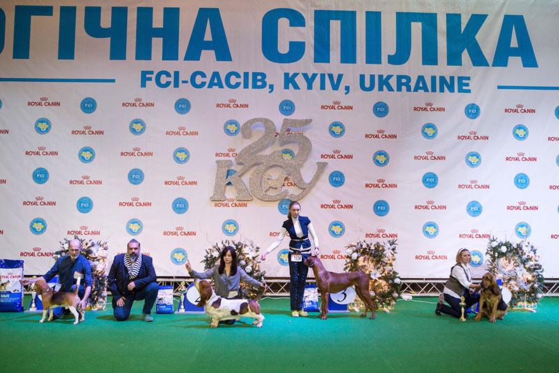 Группа FCI VI - BIS CACIB «Киевская Русь - 2015» (Украина), 5 декабря 2015 года