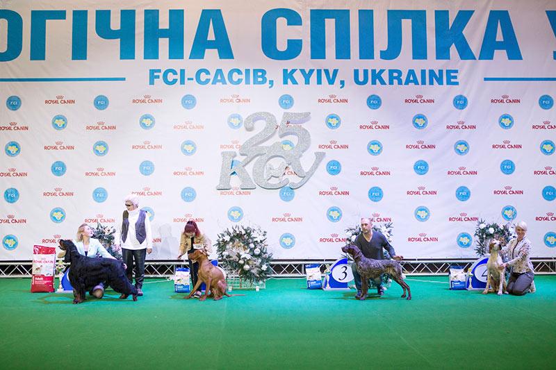Группа FCI VII - BIS CACIB «Киевская Русь - 2015» (Украина), 5 декабря 2015 года