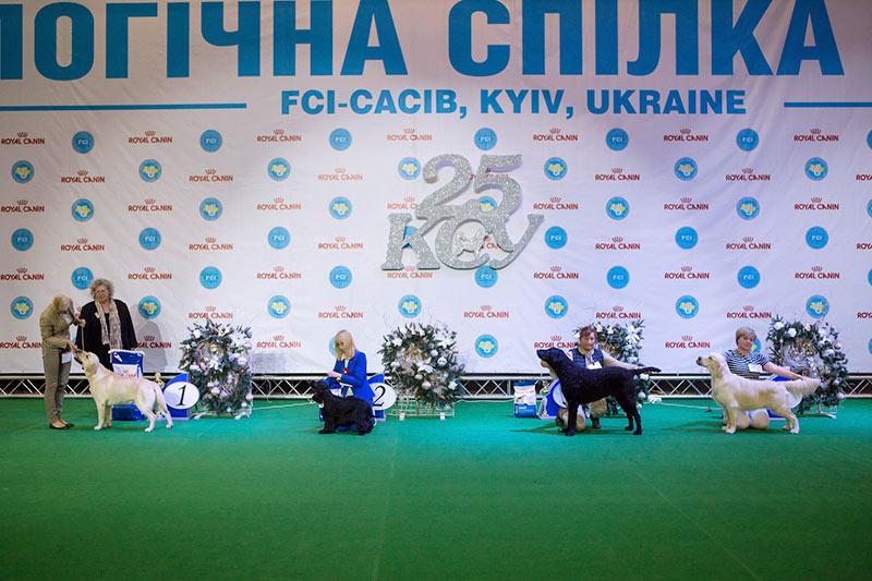 Группа FCI VIII - BIS CACIB «Киевская Русь - 2015» (Украина), 5 декабря 2015 года