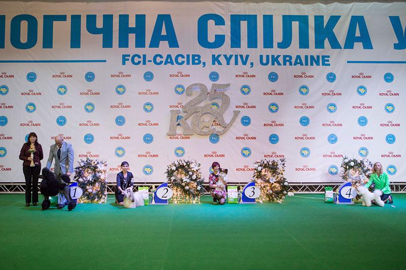 Группа FCI IX - BIS CACIB «Киевская Русь - 2015» (Украина), 5 декабря 2015 года