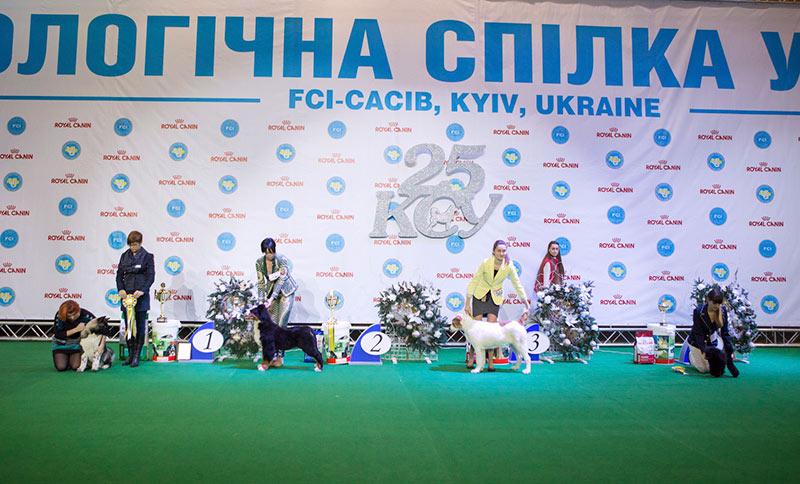 Лучший бэби - BIS CACIB «Киевская Русь - 2015» (Украина), 5 декабря 2015 года