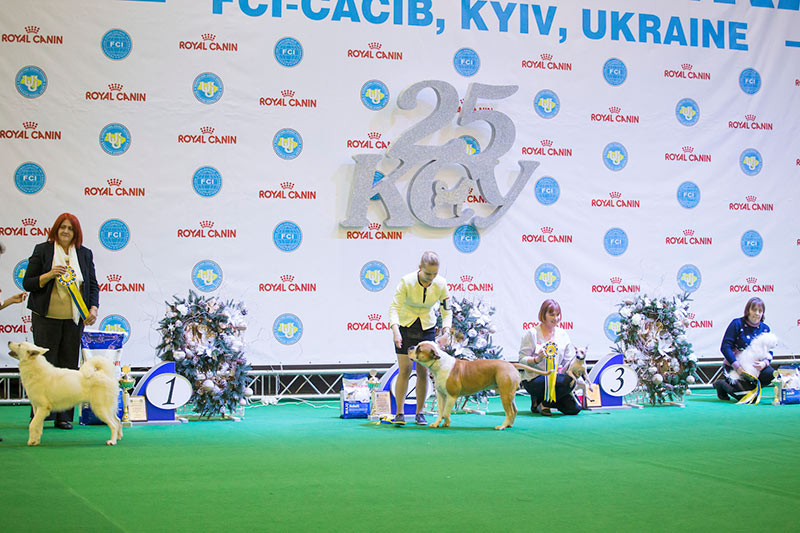 Конкурс национально-признанных пород - BIS CACIB «Киевская Русь - 2015» (Украина), 5 декабря 2015 года