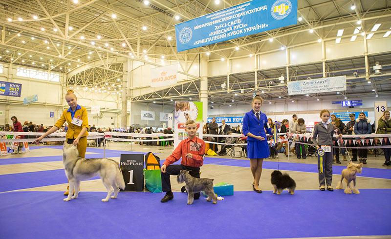 Конкурс Юный хэндлер (10-12 лет) - BIS CACIB «Киевская Русь - 2015» (Украина), 5 декабря 2015 года