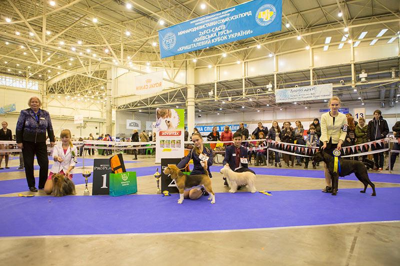 Конкурс Юный Хэндлер (13-17 лет) - BIS CACIB «Киевская Русь - 2015» (Украина), 5 декабря 2015 года