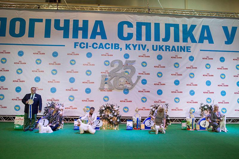 Лучший юниор - BIS CACIB «Киевская Русь - 2015» (Украина), 5 декабря 2015 года