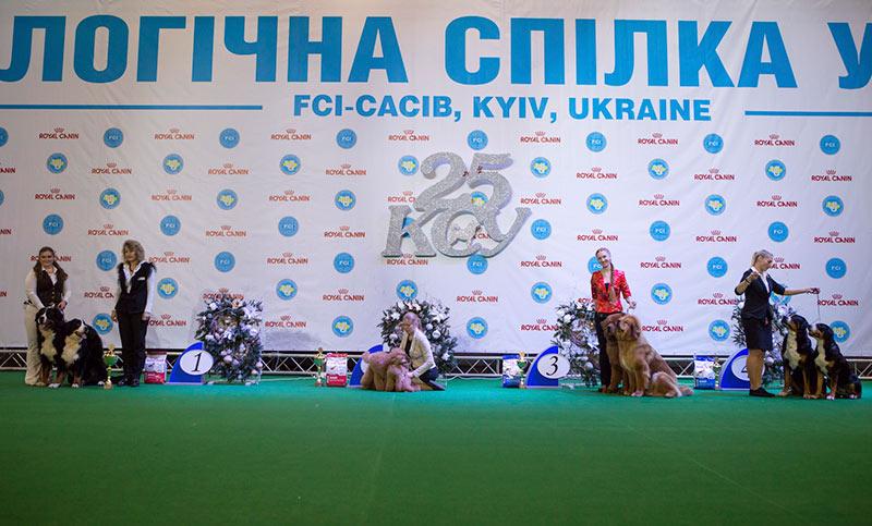 Лучшая пара - BIS CACIB «Киевская Русь - 2015» (Украина), 5 декабря 2015 года