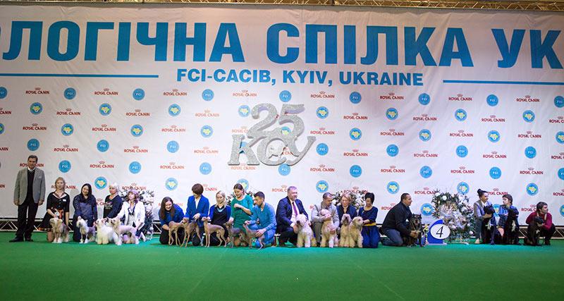 Лучший производитель - BIS CACIB «Киевская Русь - 2015» (Украина), 5 декабря 2015 года