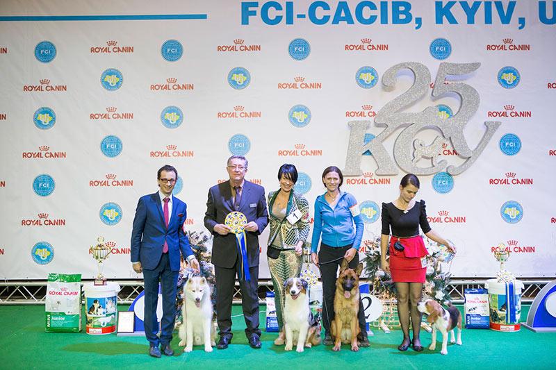 Лучший щенок - BIS CACIB «Киевская Русь - 2015» (Украина), 5 декабря 2015 года