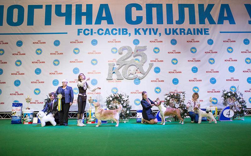 Лучший ветеран - BIS CACIB «Киевская Русь - 2015» (Украина), 5 декабря 2015 года