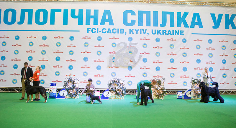FCI group II - BIS CACIB «Crystal Cup of Ukraine 2015», 6 December 2015