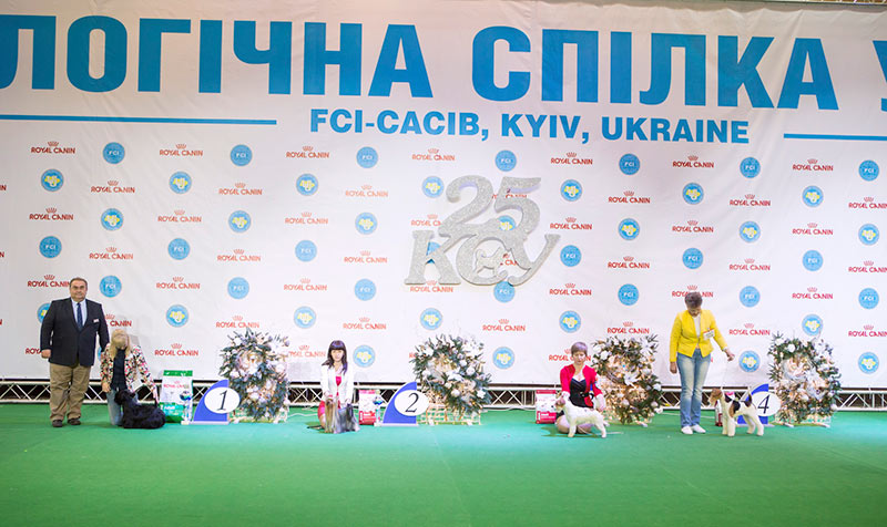 FCI group III - BIS CACIB «Crystal Cup of Ukraine 2015», 6 December 2015