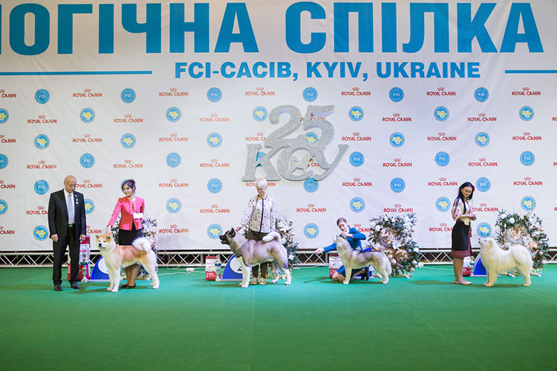 FCI group V - BIS CACIB «Crystal Cup of Ukraine 2015», 6 December 2015