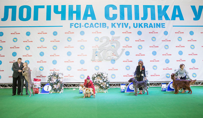 FCI group VII - BIS CACIB «Crystal Cup of Ukraine 2015», 6 December 2015