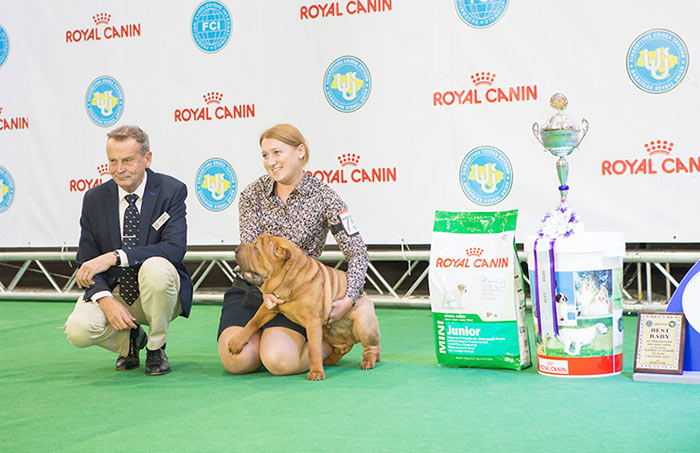 Best Baby - BIS CACIB «Crystal Cup of Ukraine 2015», 6 December 2015
