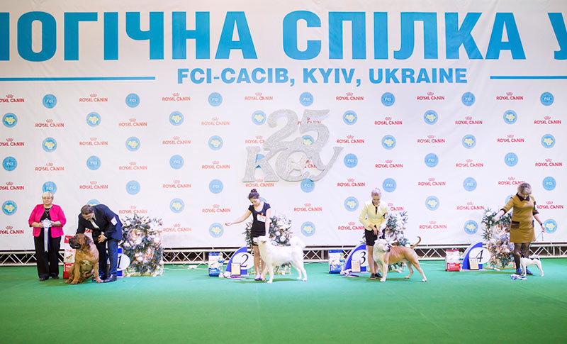 Nationally-recognized breed - BIS CACIB «Crystal Cup of Ukraine 2015», 6 December 2015
