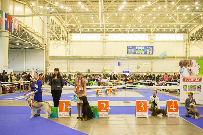 Junior Handler Competition (10-12 years) - BIS CACIB «Crystal Cup of Ukraine 2015», 6 December 2015