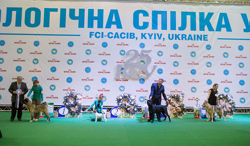 Best Junior - BIS CACIB «Crystal Cup of Ukraine 2015», 6 December 2015
