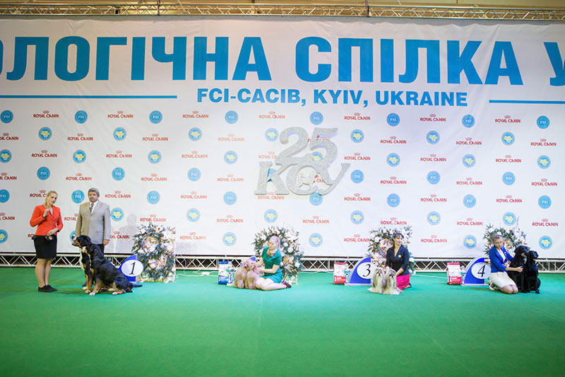Best Brace - BIS CACIB «Crystal Cup of Ukraine 2015», 6 December 2015