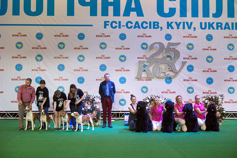 Best Progeny - BIS CACIB «Crystal Cup of Ukraine 2015», 6 December 2015
