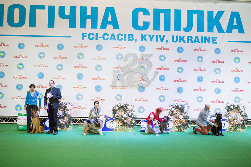 Best Puppy - BIS CACIB «Crystal Cup of Ukraine 2015», 6 December 2015
