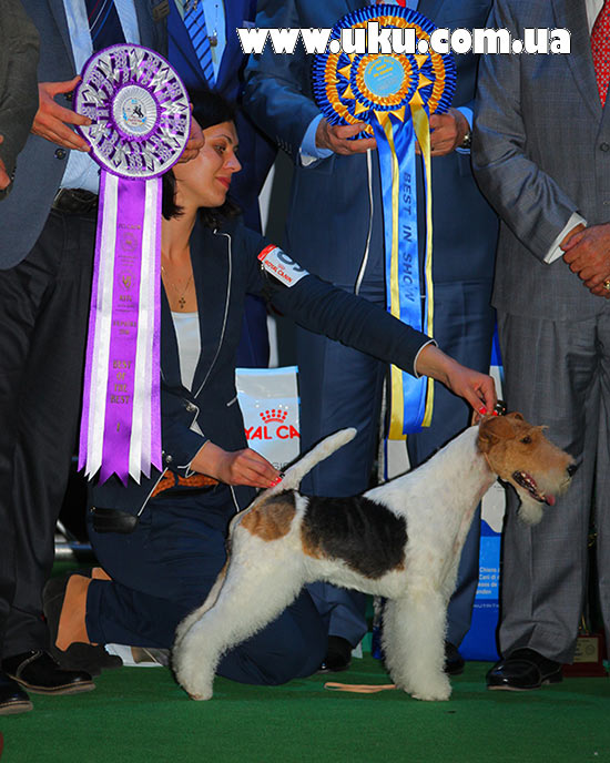 Best in Show (BIS) - BIS CACIB «Ukraine 2016» (Kiev), Sunday, 24 April (photo)